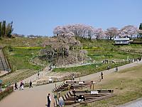 Takizakura1